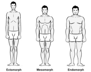 Body-Types-Ectomorph-Mesomorph-And-Endomorph-photo
